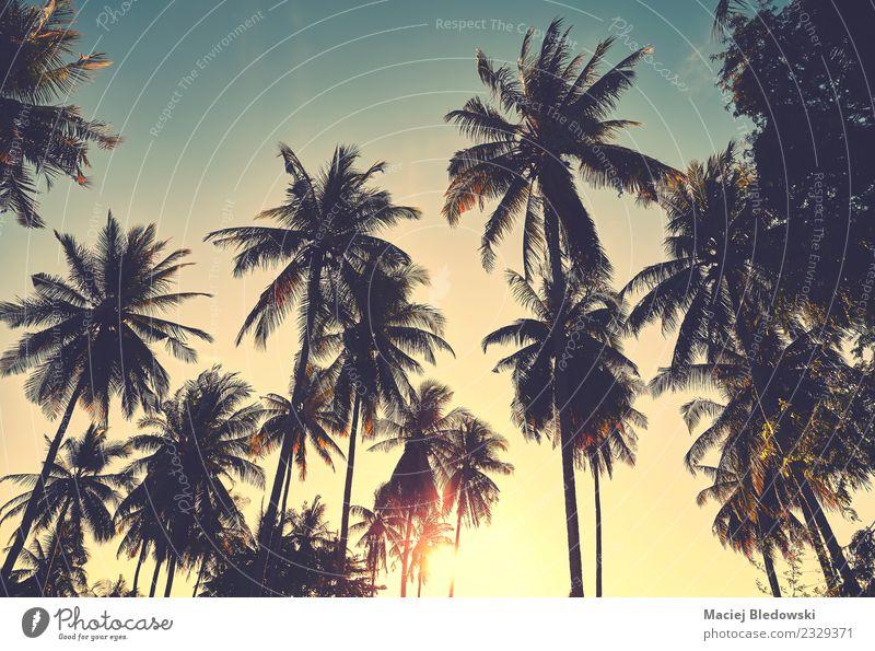 Kokospalmen Silhouetten bei Sonnenuntergang, Urlaubskonzept. exotisch schön Erholung Ferien & Urlaub & Reisen Abenteuer Freiheit Sommer Sommerurlaub Strand