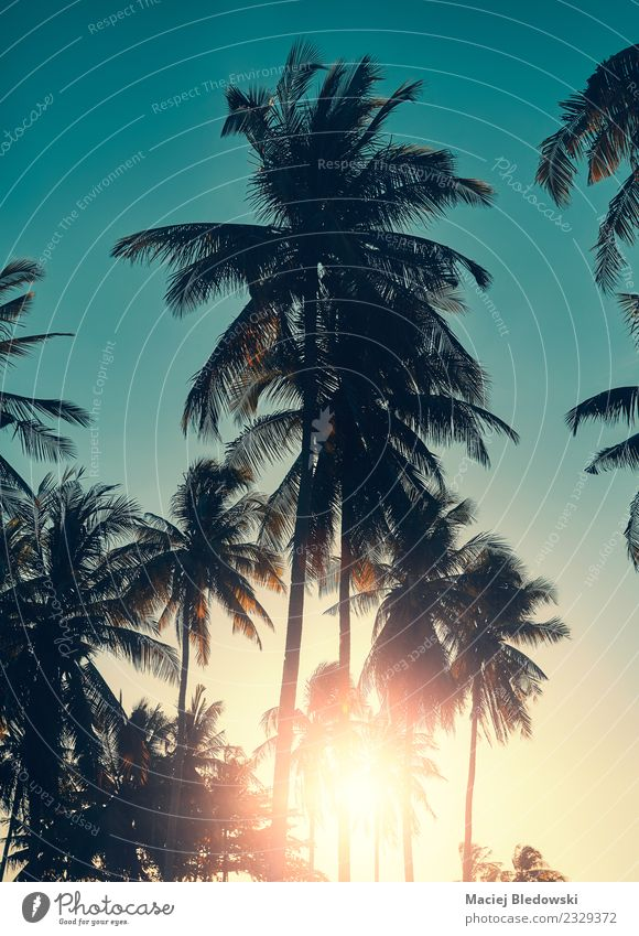 Himmel Natur Ferien & Urlaub & Reisen Sommer Sonne Baum Erholung ruhig Strand Tourismus Freiheit Ausflug Abenteuer Insel Sommerurlaub exotisch