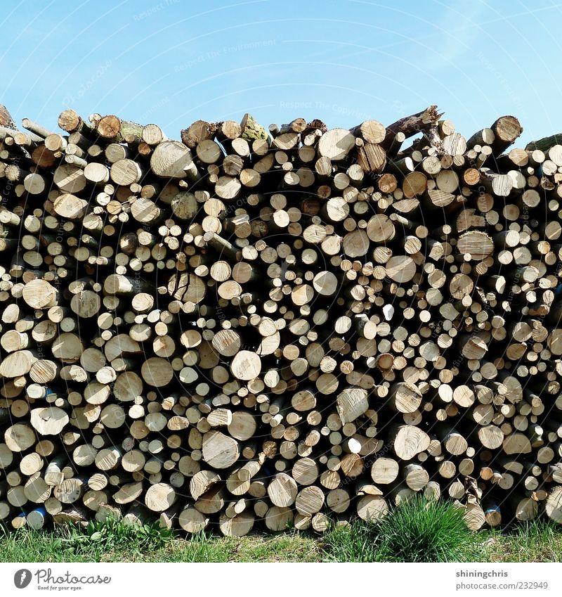 holz vor der hütte Natur Himmel Wolkenloser Himmel Schönes Wetter Gras Holz Baumstamm heizen rund Totholz Stapel Forstwirtschaft Sonnenlicht Menschenleer