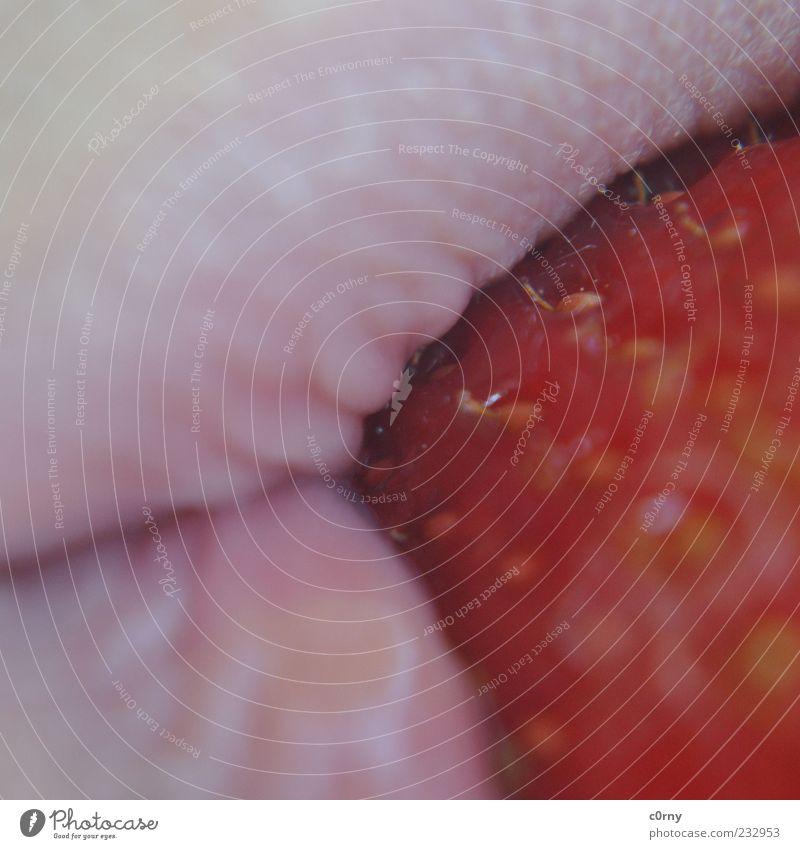 dein Erdbeermund Lebensmittel Frucht Erdbeeren Mund Lippen genießen lecker Farbfoto Außenaufnahme Detailaufnahme Tag Makroaufnahme Nahaufnahme Ernährung