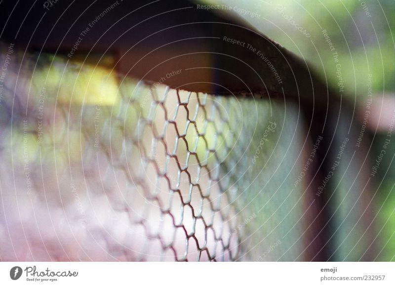 made with a nikon Natur Garten Netzwerk Maschendraht Maschendrahtzaun Zaun Grenze gefangen Begrenzung Muster analog Farbfoto Außenaufnahme