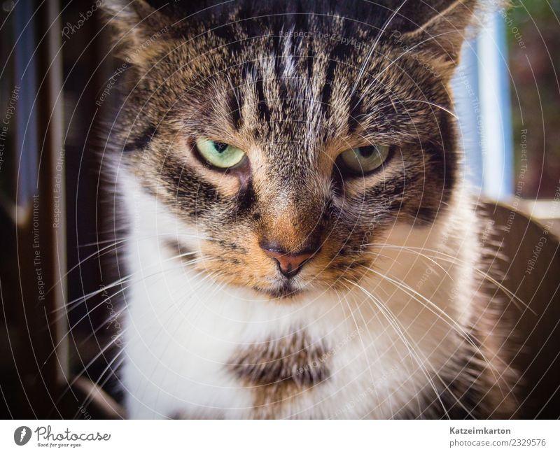 Wer wagt es zu stören? Katze Tier kalt außergewöhnlich Denken Stimmung Häusliches Leben Kraft niedlich beobachten bedrohlich Coolness Haustier Fell