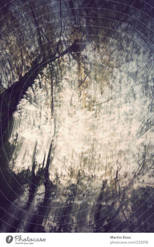 vor sonnenuntergang Natur schön Baum Landschaft Gefühle See träumen Stimmung Hintergrundbild ästhetisch gefährlich Streifen Sträucher Neugier unten Lebensfreude