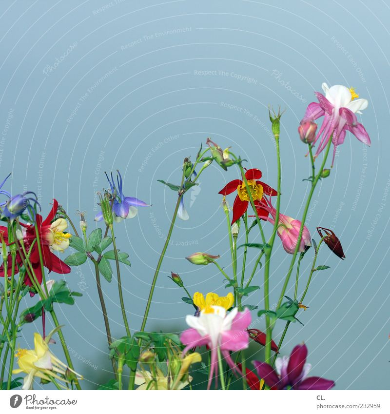 buntblumen Natur grün schön Sommer Pflanze Blume Blatt Umwelt Leben Frühling Blüte Garten natürlich Wachstum Schönes Wetter Fröhlichkeit