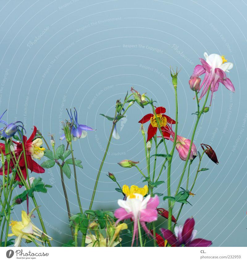 buntblumen Umwelt Natur Pflanze Frühling Sommer Schönes Wetter Blume Blatt Blüte Wildpflanze Garten Fröhlichkeit schön natürlich Vergänglichkeit