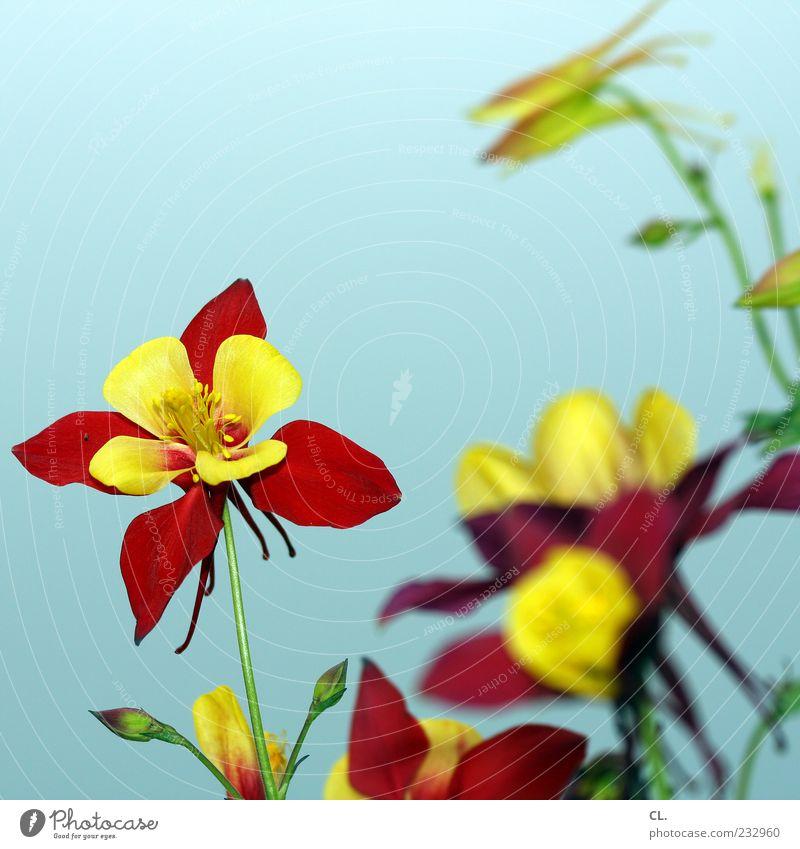 buntblumen Umwelt Natur Pflanze Frühling Sommer Schönes Wetter Blume Blatt Blüte Wildpflanze Garten Fröhlichkeit schön natürlich gelb rot Vergänglichkeit