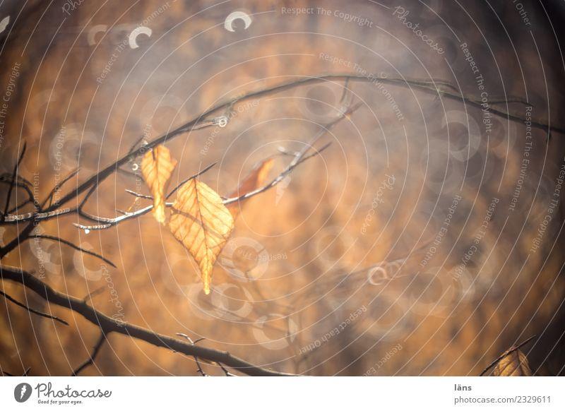 Blätter im Gegenlicht Natur Blatt Wald braun Sonne Sonnenstrahlen