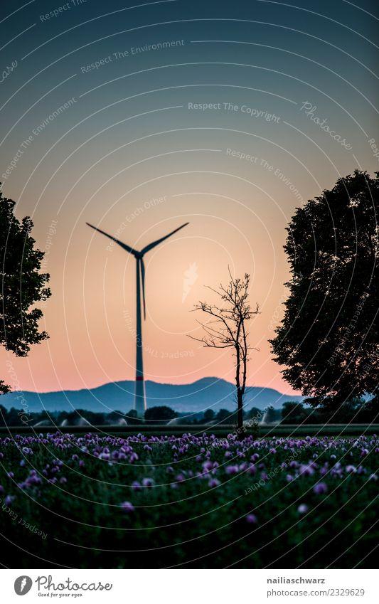 Windmühle Energiewirtschaft Windkraftanlage Umwelt Natur Landschaft Pflanze Luft Himmel Horizont Sonnenaufgang Sonnenuntergang Sommer Baum Blume Mohn Mohnfeld