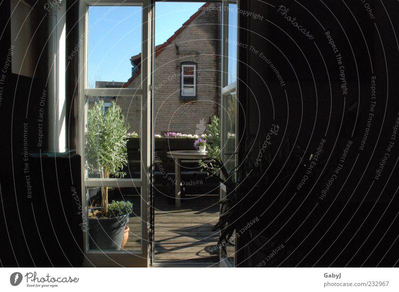 ... ins Licht treten ruhig Häusliches Leben Wohnung Dekoration & Verzierung Raum Dachterrasse Sonnenlicht Schönes Wetter Topfpflanze Balkondekoration dunkel