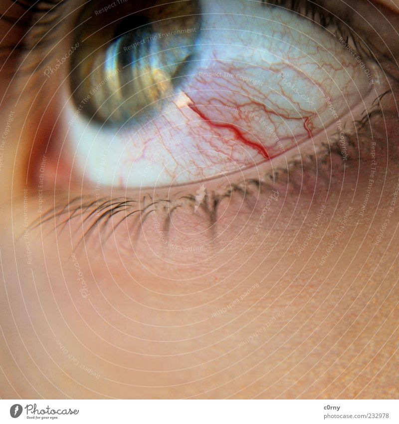 rinnsal Auge Wimpern Blick Ekel Farbfoto Detailaufnahme Reflexion & Spiegelung Gefäße geplatzt Textfreiraum unten Blut Momentaufnahme Pupille Regenbogenhaut