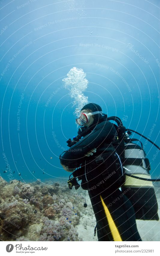 KINGDOM Natur Ferien & Urlaub & Reisen Meer Erholung Freiheit Freizeit & Hobby natürlich Abenteuer Reisefotografie tauchen entdecken Luftblase selbstbewußt Taucher Riff Taucherbrille