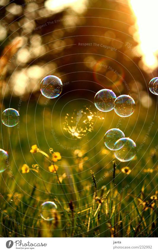 OoO Oo Natur Sommer Wiese Frühling träumen fliegen mehrere Schönes Wetter Momentaufnahme Schweben Leichtigkeit Seifenblase platzen zerspringen Reflexion & Spiegelung