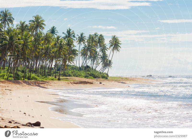 Natur Ferien & Urlaub & Reisen Pflanze Sommer Wasser Landschaft Meer Erholung Strand Küste Tourismus Horizont Idylle Insel Postkarte erleuchten