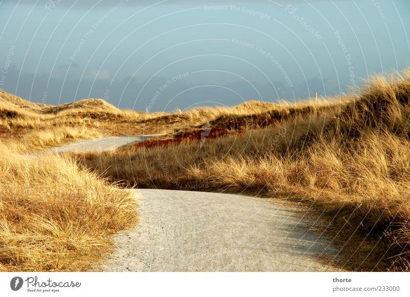 Wanderdünen blau gelb Landschaft grau Wege & Pfade Stimmung Fußweg Düne Dünengras