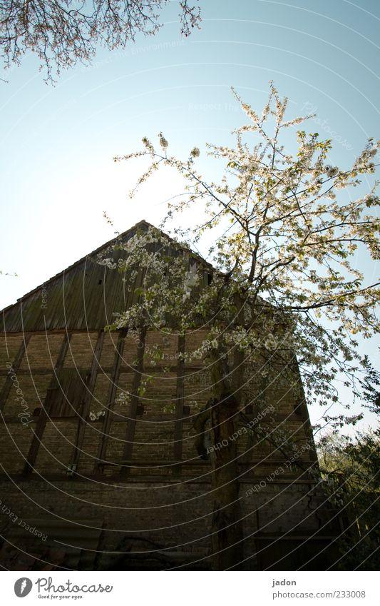 frühling auf dem land. Haus Garten Hütte Bauwerk Gebäude Mauer Wand Stein alt historisch Gelassenheit ruhig Heimweh Scheune Baum Blühend Blüte Dorfidylle