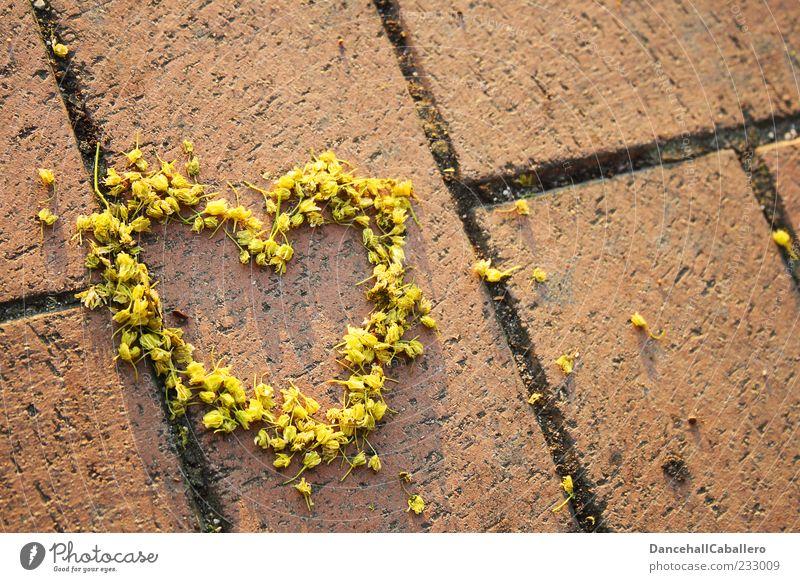 p.s. ich liebe dich Blume Liebe Gefühle Glück Blüte Herz Romantik Symbole & Metaphern Kreativität Sehnsucht Verliebtheit Valentinstag Zuneigung Frühlingsgefühle