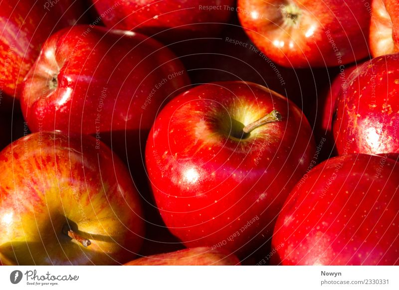 Frische gesunde leckere rote Bio Apfel sorten Lebensmittel Bioprodukte Vegetarische Ernährung authentisch einfach frisch sommerapfel süß gepunktet Stil reif