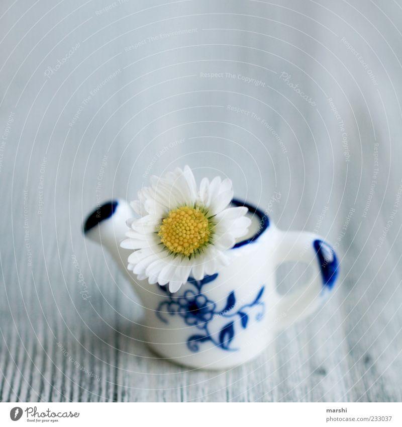 ein Minigruß Pflanze Blume klein blau gelb weiß Gänseblümchen Kannen Holzbrett süß Gießkanne Dekoration & Verzierung Vase Farbfoto Innenaufnahme Miniatur