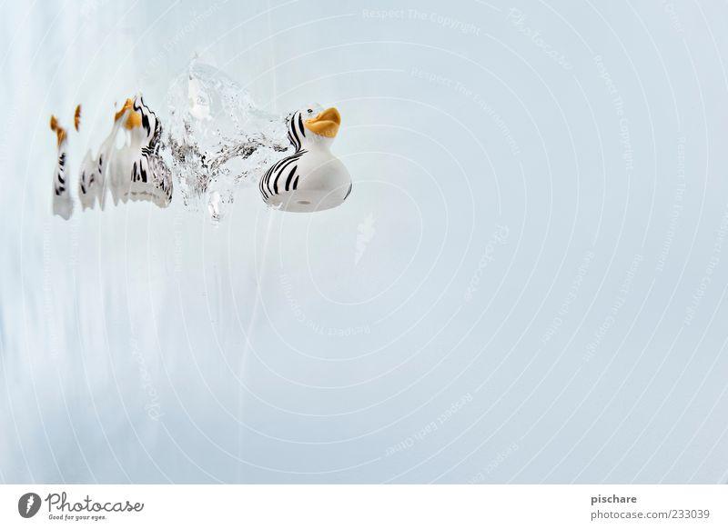 Platsch! Wasser Schwimmen & Baden tauchen Badeente Farbfoto Unterwasseraufnahme Textfreiraum rechts Freisteller Hintergrund neutral Reflexion & Spiegelung