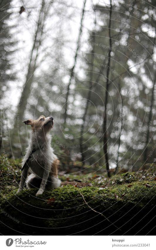 Hundewetter Natur grün Pflanze Tier schwarz Wald Umwelt dunkel grau Tierjunges Regen braun warten sitzen wild