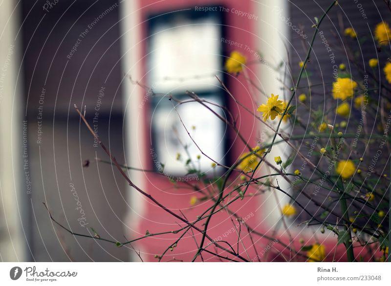 Frühling in Berlin II rot Pflanze gelb Blüte Gebäude Autofenster Fassade Sträucher Blühend Zweige u. Äste
