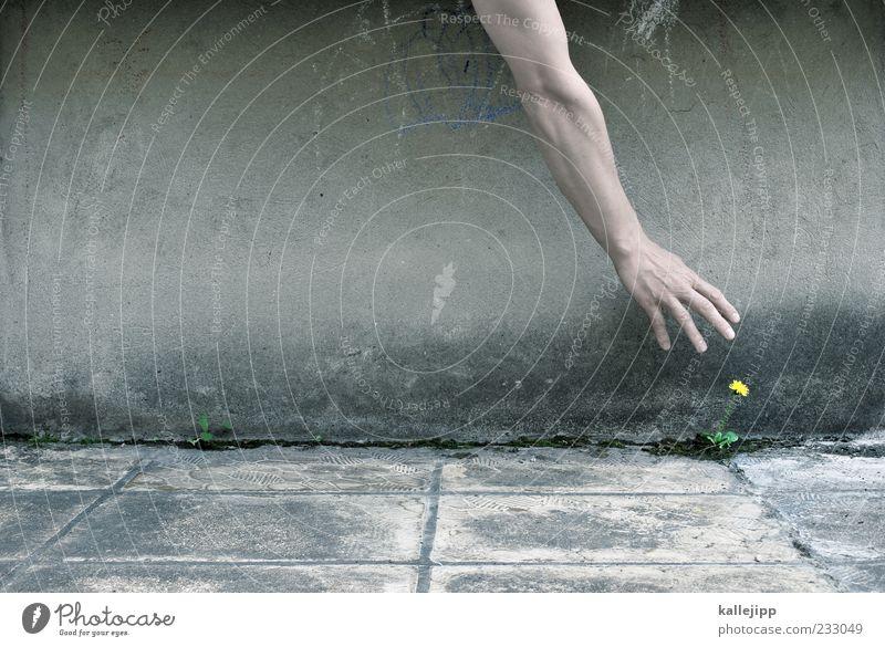 florist Mensch Mann Natur Hand Pflanze Blume Erwachsene Umwelt Leben Wand grau Mauer Fassade Arme Klima Finger