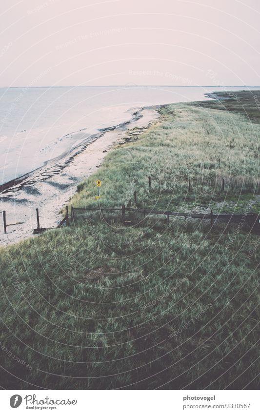 Weitblick Umwelt Landschaft Tier Sand Wasser Himmel Wolkenloser Himmel Pflanze Gras Sträucher Grünpflanze Wellen Küste Strand Ostsee frei Unendlichkeit maritim