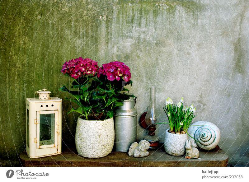 mädchenfoto Lifestyle elegant Stil Design Häusliches Leben Wohnung Pflanze Blume Blühend Dekoration & Verzierung Engel Laterne Hibiscus Topfpflanze
