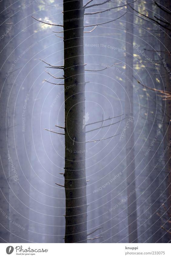 mitten im Nebel Umwelt Natur Pflanze Luft Sonnenlicht Schönes Wetter Baum Wald Holz Linie Wachstum alt dunkel blau braun schwarz ruhig Nebelstimmung Nebelwald