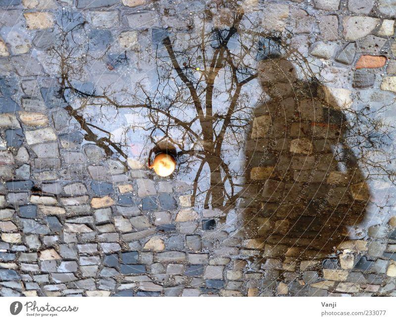Zwiebel über Bord Lebensmittel 1 Mensch schlechtes Wetter Regen Baum Fußgänger stehen Einsamkeit verschwenden Pfütze Reflexion & Spiegelung Kopfsteinpflaster