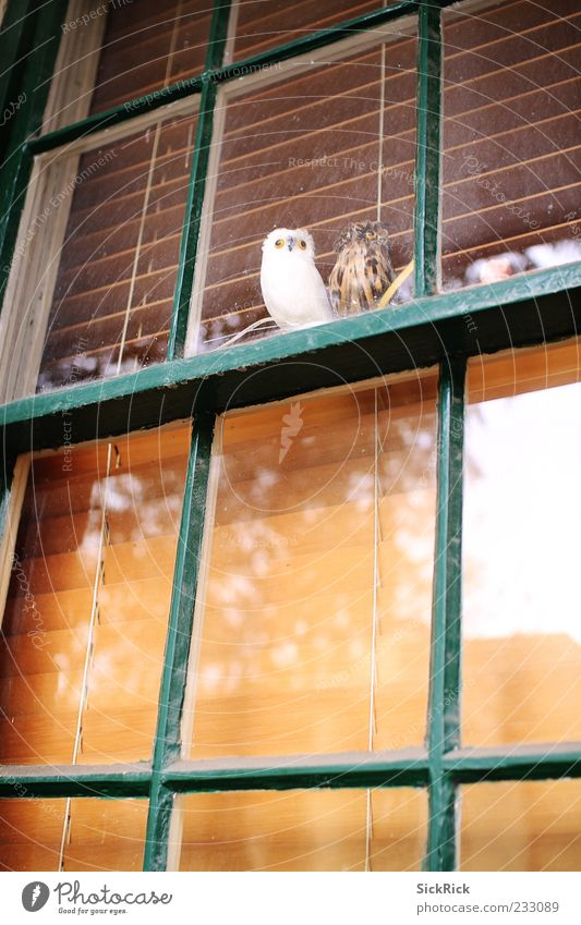 Owls Fenster Tier Eulenvögel 2 ruhig Blick Reflexion & Spiegelung falsch Jalousie Farbfoto Außenaufnahme Menschenleer Textfreiraum unten Textfreiraum Mitte Tag