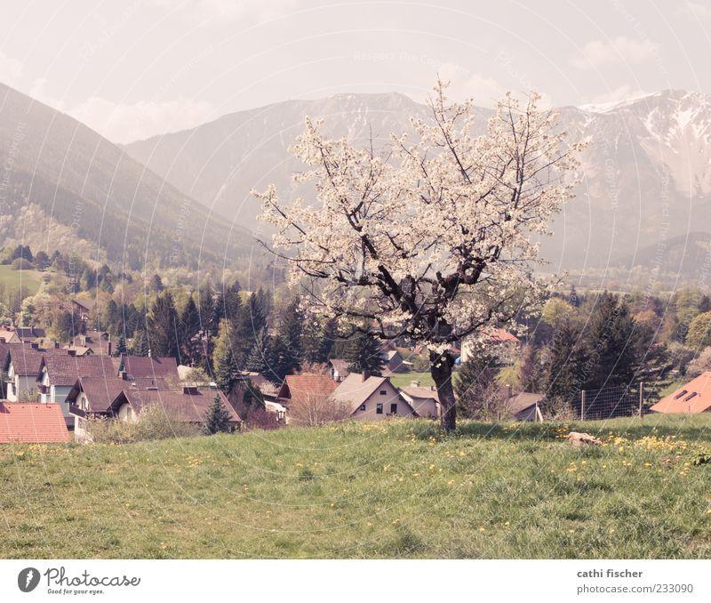 Frühling in Puchberg Himmel Natur Baum Ferien & Urlaub & Reisen Pflanze Sommer Wolken Haus Wald Umwelt Wiese Landschaft Berge u. Gebirge Gras Gebäude