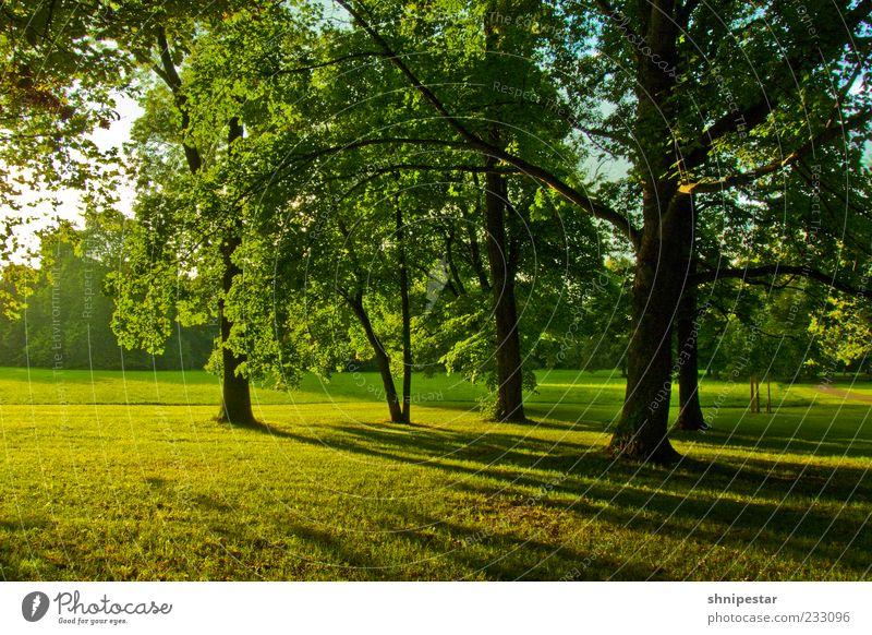 Waldmeister 2 Natur grün schön Baum Pflanze Sommer Erholung Umwelt Wiese Landschaft Gras Frühling Park Wetter Klima
