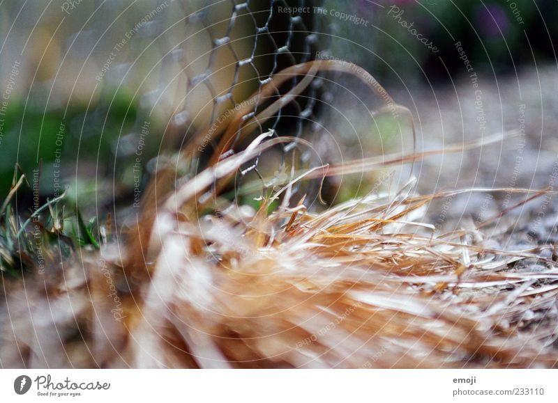 Schärfeverteilung Natur Pflanze Dürre Gras Sträucher dehydrieren Maschendraht Maschendrahtzaun Zaun Begrenzung Grenze analog Farbfoto Außenaufnahme