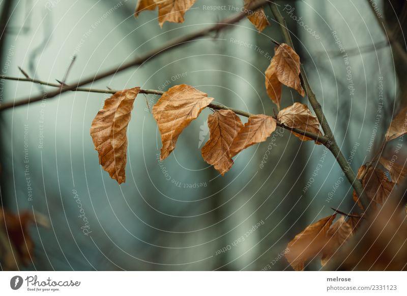 Herbstblues Umwelt Natur Himmel Wetter Pflanze Baum Blatt Wildpflanze Zweige u. Äste Wald Perspektive Neigung Abzweigung hängen träumen dehydrieren dunkel nah