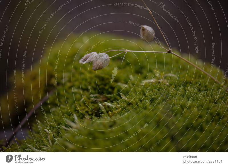 gebettet auf Moos Umwelt Natur Erde Winter Pflanze Blüte Wildpflanze Moosbett Moosteppich Lebewesen Wald Stillleben weich Erholung liegen dunkel natürlich braun