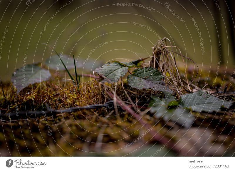 Blätter auf Moosboden Umwelt Natur Erde Frühling Klima Wetter Pflanze Gras Blatt Grünpflanze Moosteppich Äste Trockne Gräser Wald Boden Bodendecker Halm hängen
