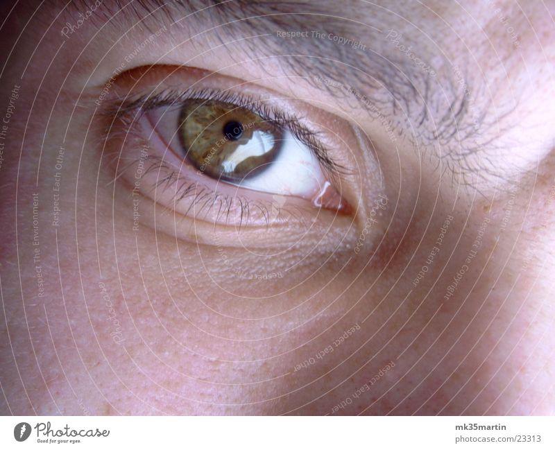 Wer guckt da? Mann Gesicht Auge braun Nase Augenbraue