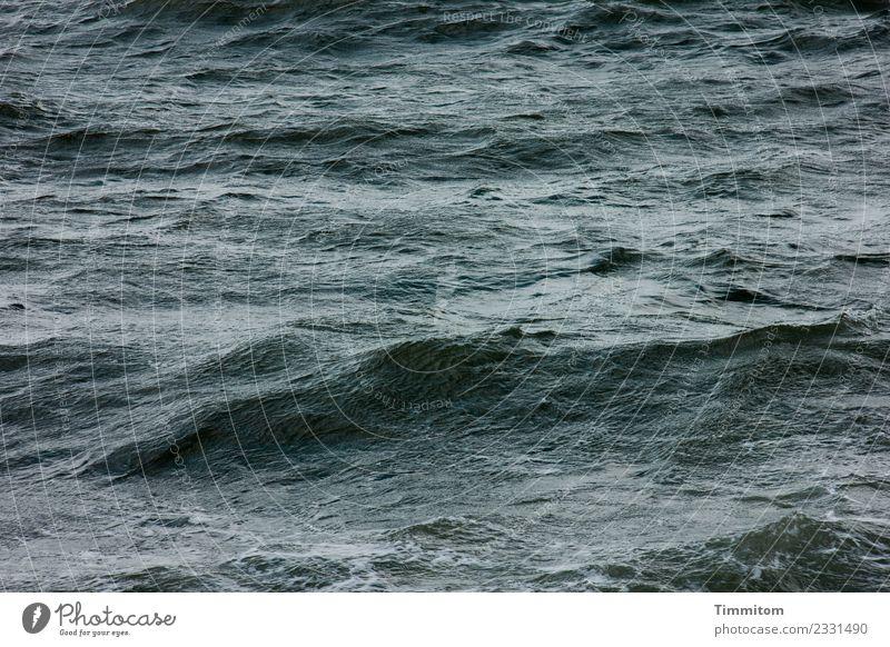 zeitlos   Wellengang Umwelt Natur Urelemente Wasser grün schwarz Gefühle Nordsee Dänemark Farbfoto Außenaufnahme Menschenleer Tag