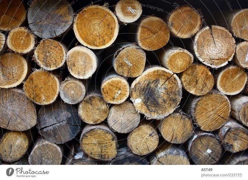 rund Umwelt Natur Herbst Pflanze Baum Nutzpflanze Holz liegen nachhaltig natürlich braun Ordnung Stapel Brennholz Farbfoto Außenaufnahme Menschenleer Lager