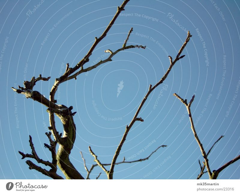 into the sky Baum eigenwillig Winter Herbst laublos Baumkrone Ast Himmel Eis
