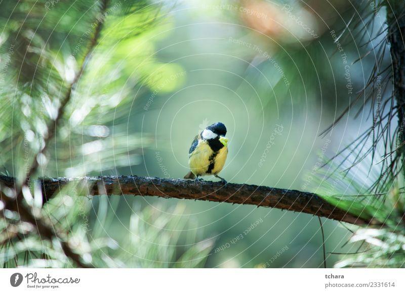 Meise schön Winter Garten Umwelt Natur Tier Baum Park Wald Vogel sitzen hell klein natürlich wild blau gelb grün weiß Vertrauen Appetit & Hunger Farbe Prima