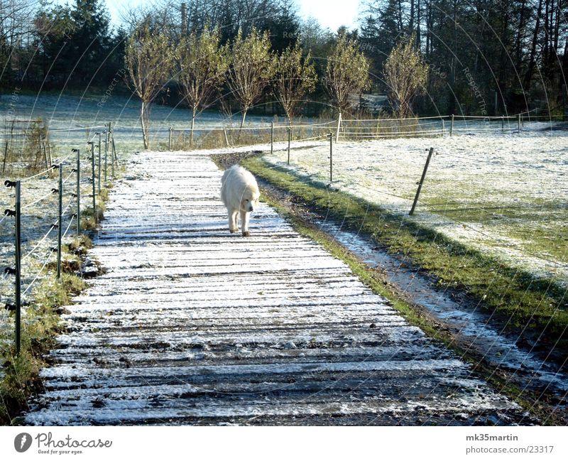 lonesome fighter weiß Einsamkeit Tier Schnee Hund Neugier entdecken verstecken ernst