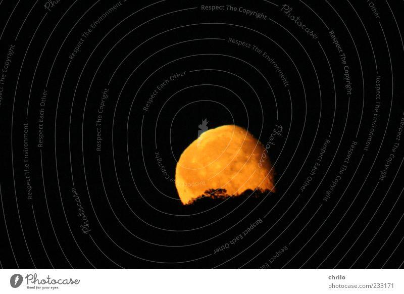 Mondaufgang Natur Landschaft Himmel Nachthimmel Vollmond Baum Hügel Menschenleer Kugel hell gelb gold schwarz Mondschein Farbfoto Außenaufnahme Nachtaufnahme