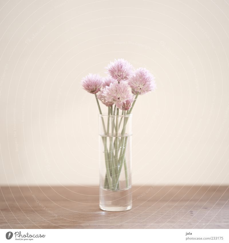 for the hungry romantic Pflanze Blume Blüte Blumenstrauß hell schön Frühlingsgefühle Farbfoto Innenaufnahme Menschenleer Textfreiraum links Textfreiraum rechts