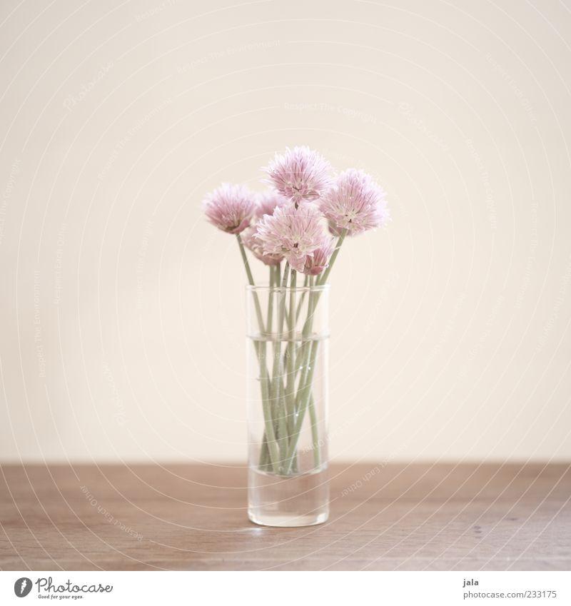 for the hungry romantic schön Pflanze Blume Blüte hell Glas Stengel Blumenstrauß Blütenblatt minimalistisch Frühlingsgefühle Blumenvase High Key