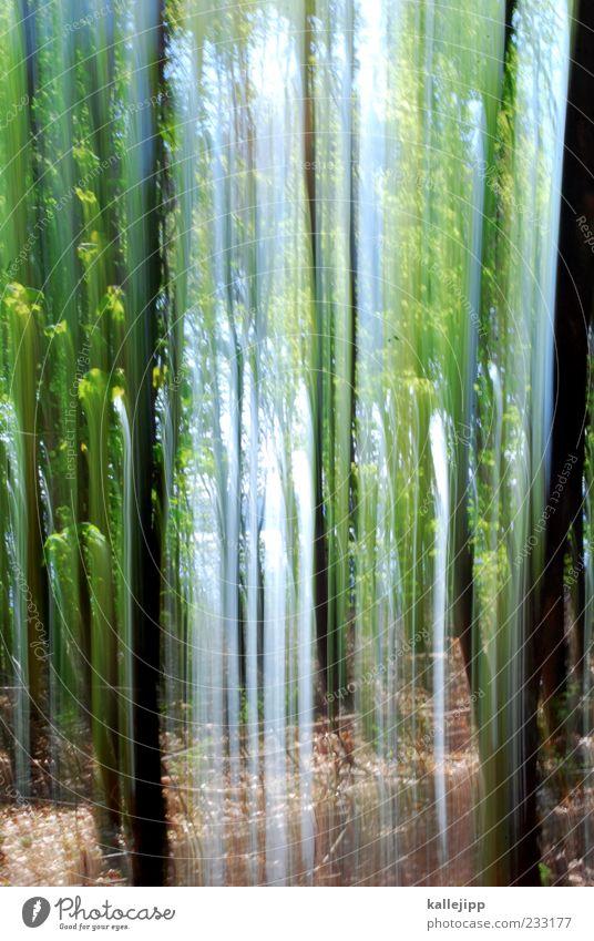 frühlingserwachen Natur Baum Pflanze Wald Erholung Umwelt Landschaft Bewegung Frühling Luft Erde fantastisch Baumstamm Textfreiraum nachhaltig schemenhaft