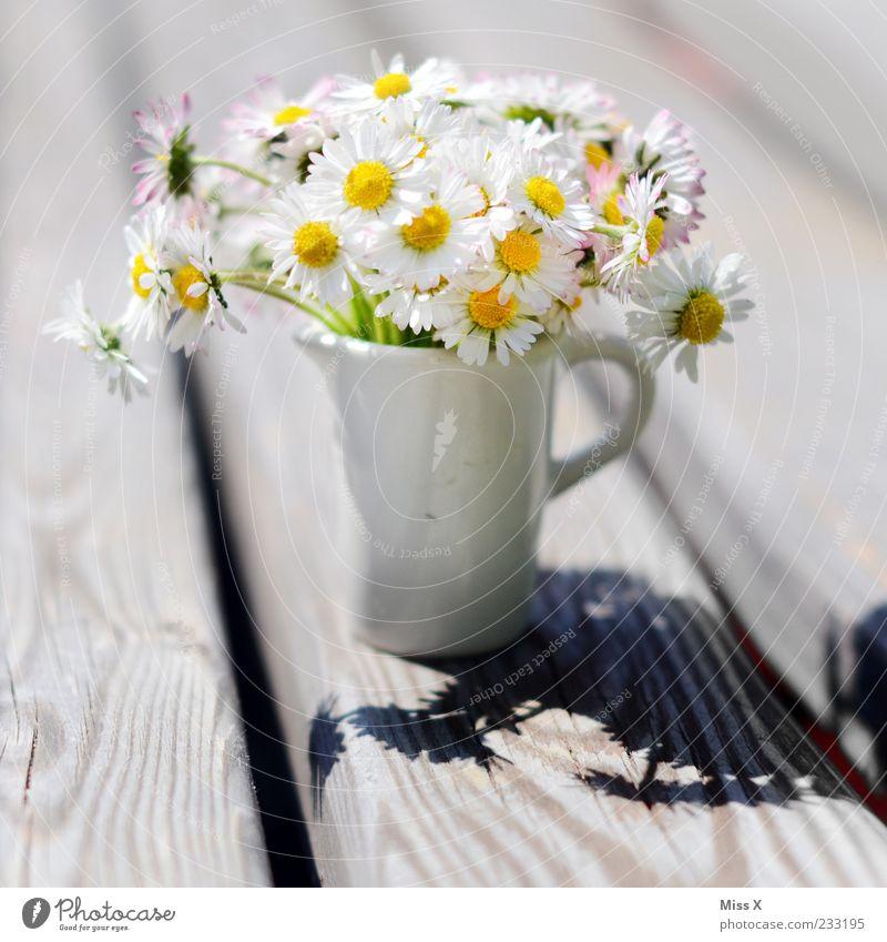 Kleiner Gruß Muttertag Pflanze Sonnenlicht Frühling Sommer Blume Blüte Blühend Duft schön Kitsch Gänseblümchen Vase Blumenstrauß Blumenvase klein Miniatur