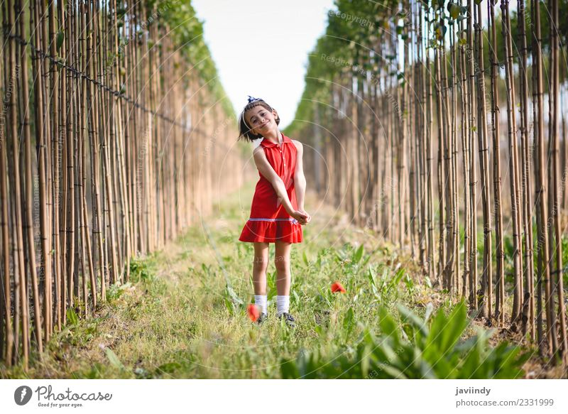 Kleines Mädchen im Mohnfeld in schönem Kleid Lifestyle Freude Glück Spielen Sommer Kind Mensch feminin Baby Frau Erwachsene Kindheit 1 3-8 Jahre Natur Blume
