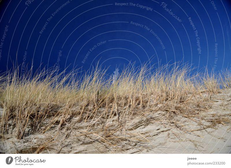 Dünengras Natur Pflanze Sand Himmel Wolkenloser Himmel Horizont Sträucher Küste Strand Insel blau Farbfoto mehrfarbig Außenaufnahme Menschenleer